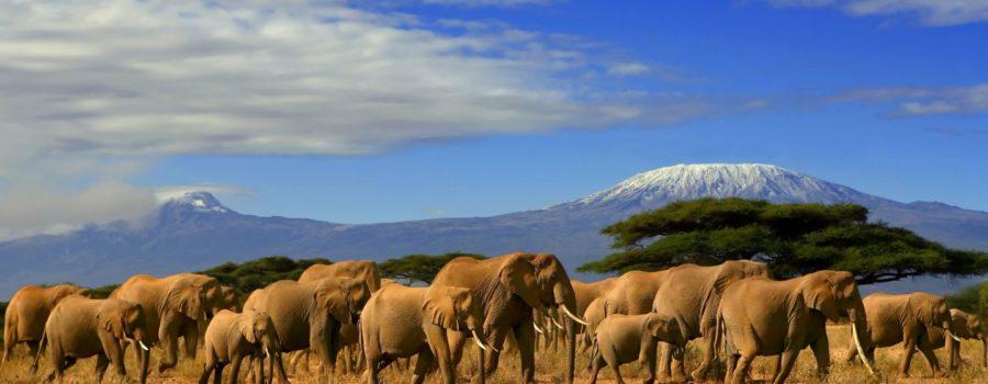 Wings Over Kenya Safari