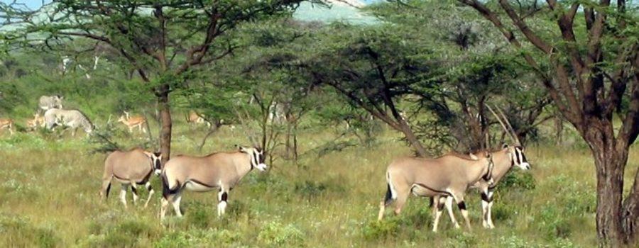 Samburu, Shaba & Meru Reserves/Parks