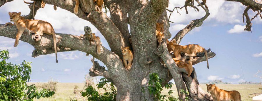 The Tanzania Safari